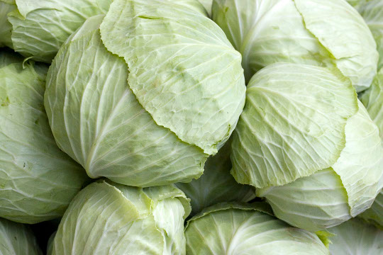 Cabbage - 10 photo
