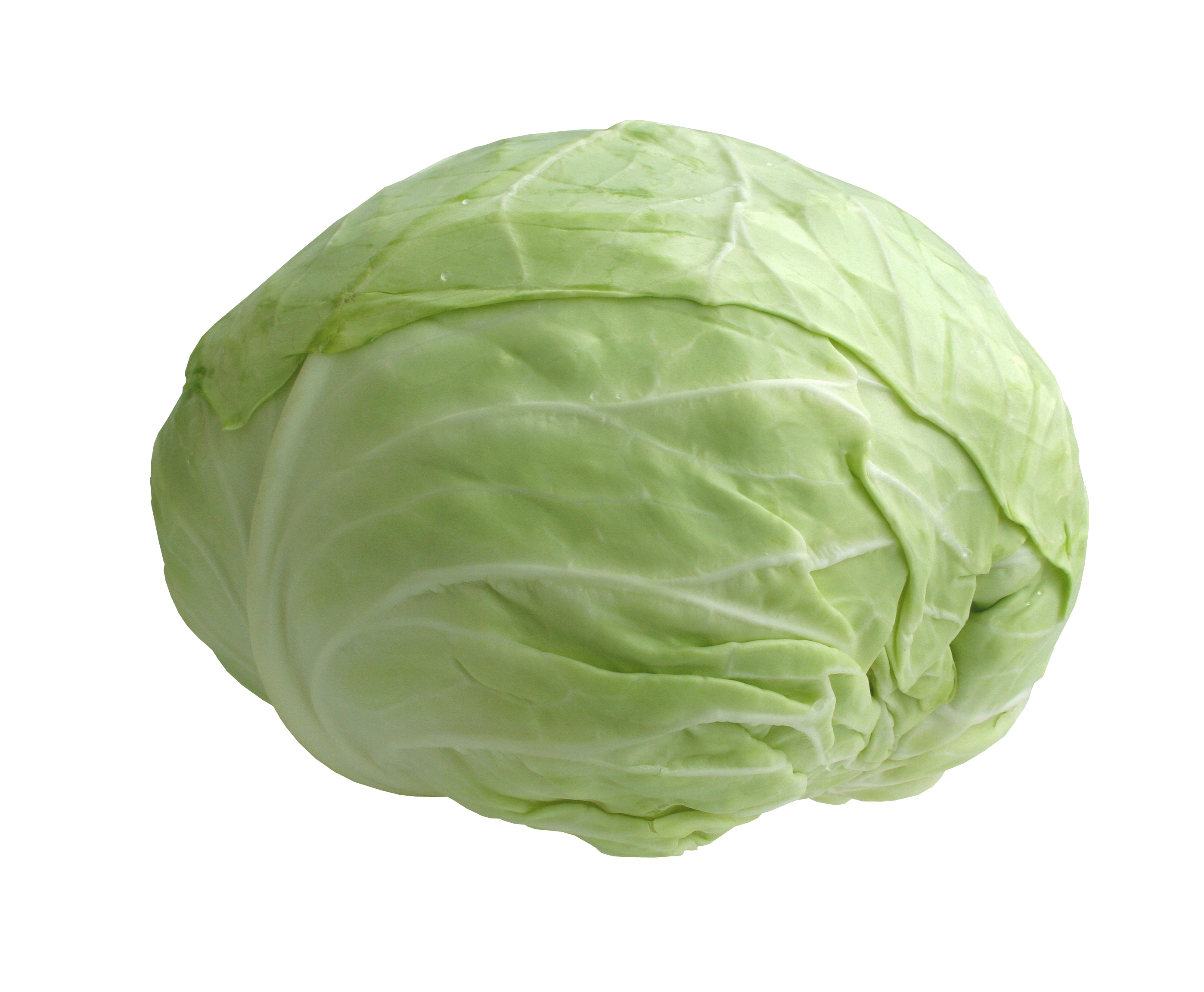 Cabbage - 13 photo