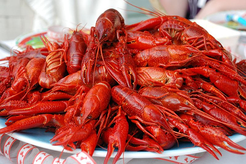Crawfish - 05 photo