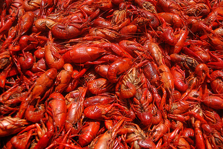 Crawfish - 07 photo