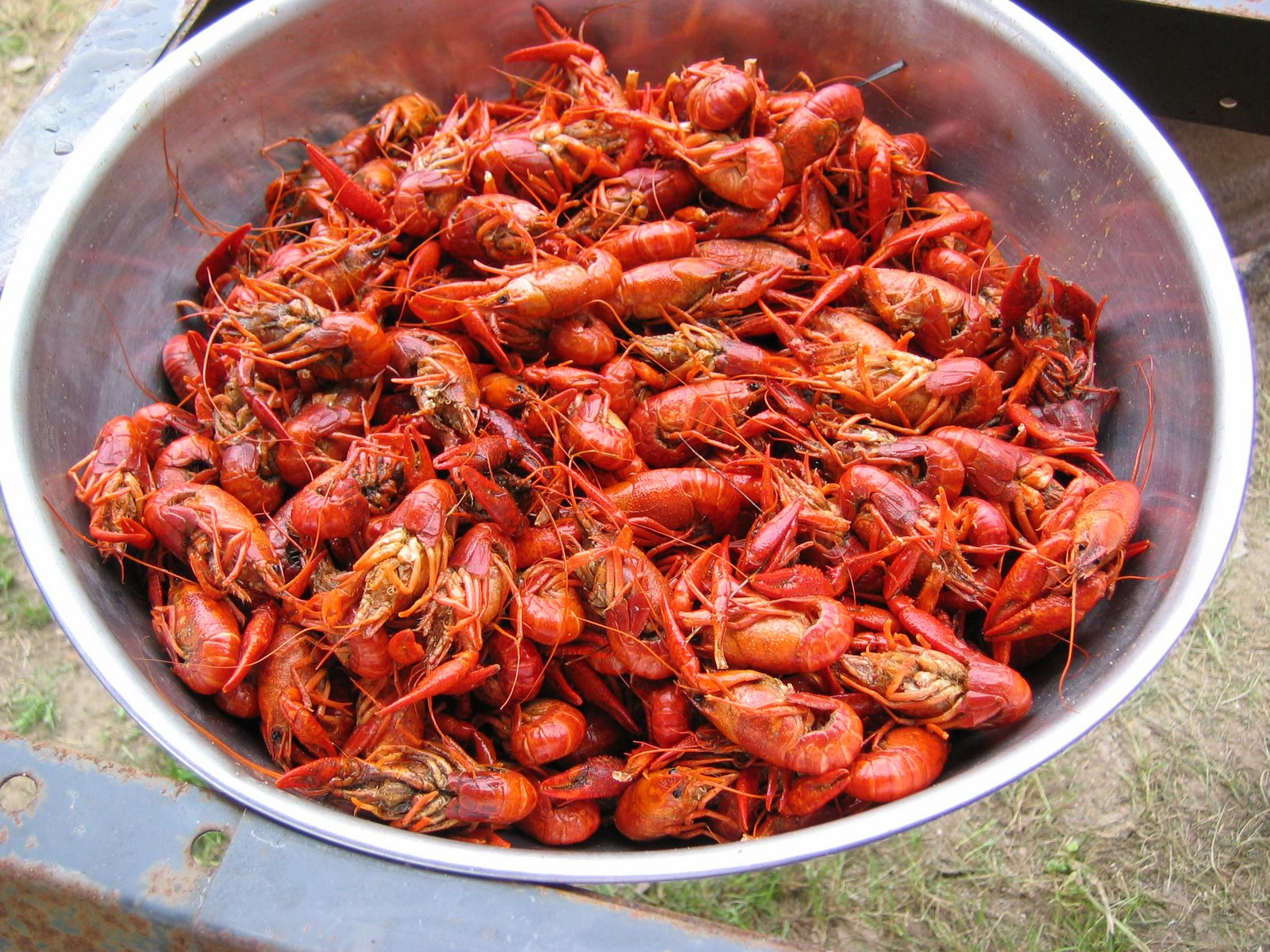 Crawfish - 11 photo