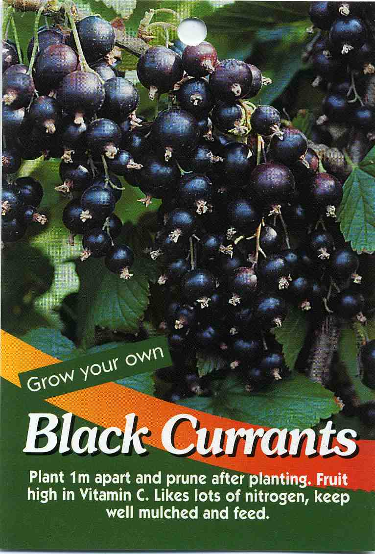 Currants - 01 photo
