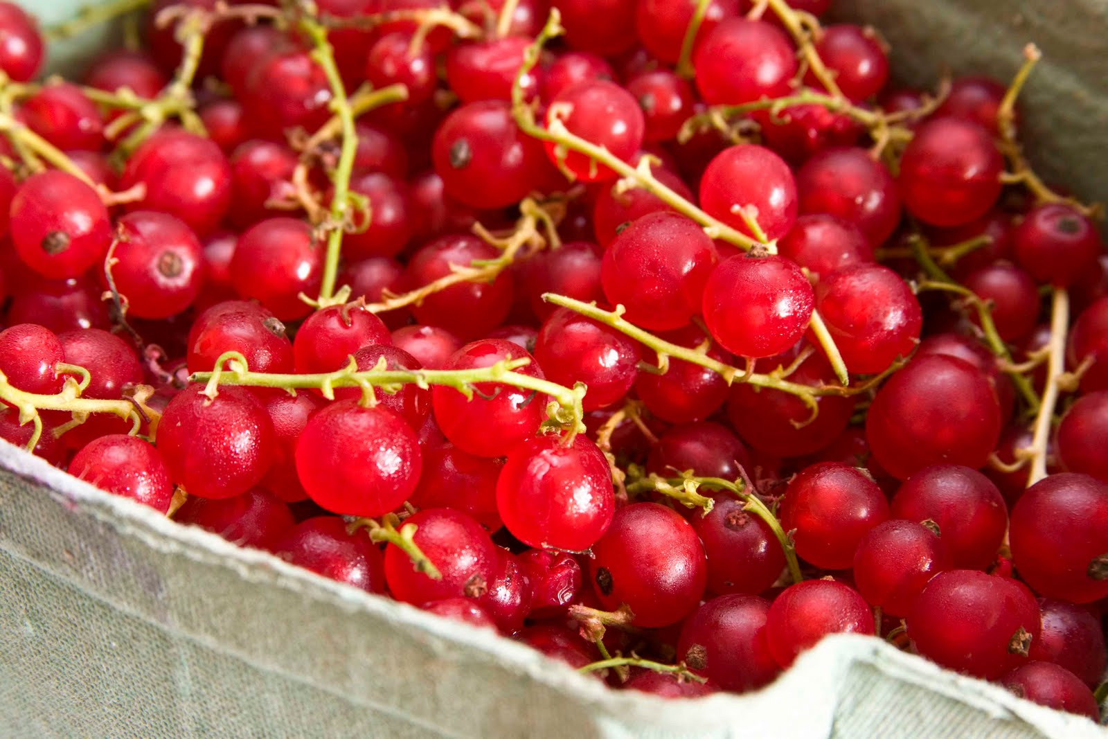 Currants - 05 photo