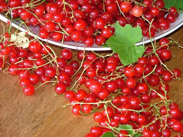 Currants - 06 photo