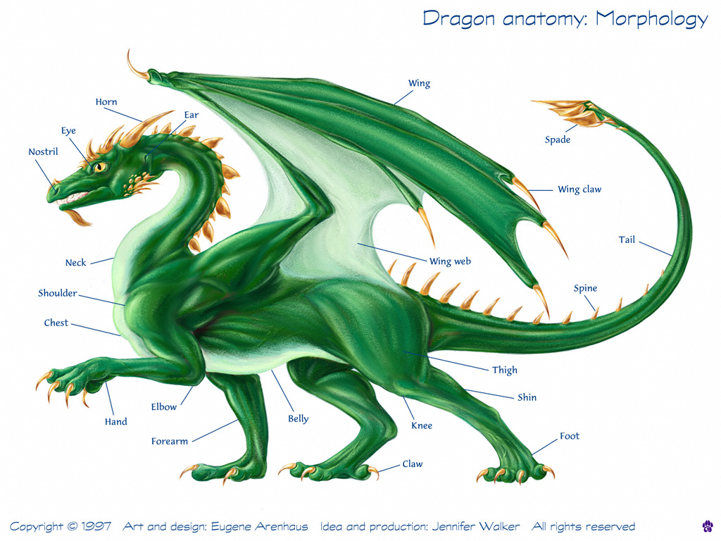 Dragon - 08 photo