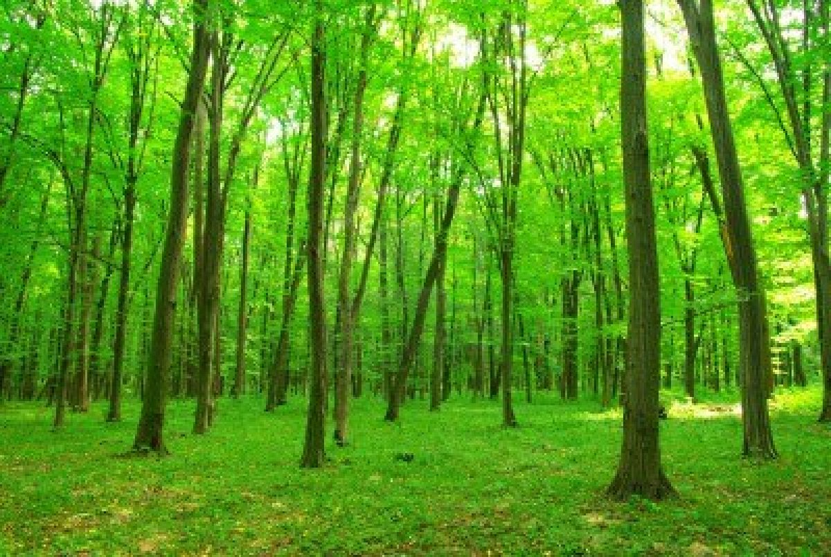 Forest - 07 photo