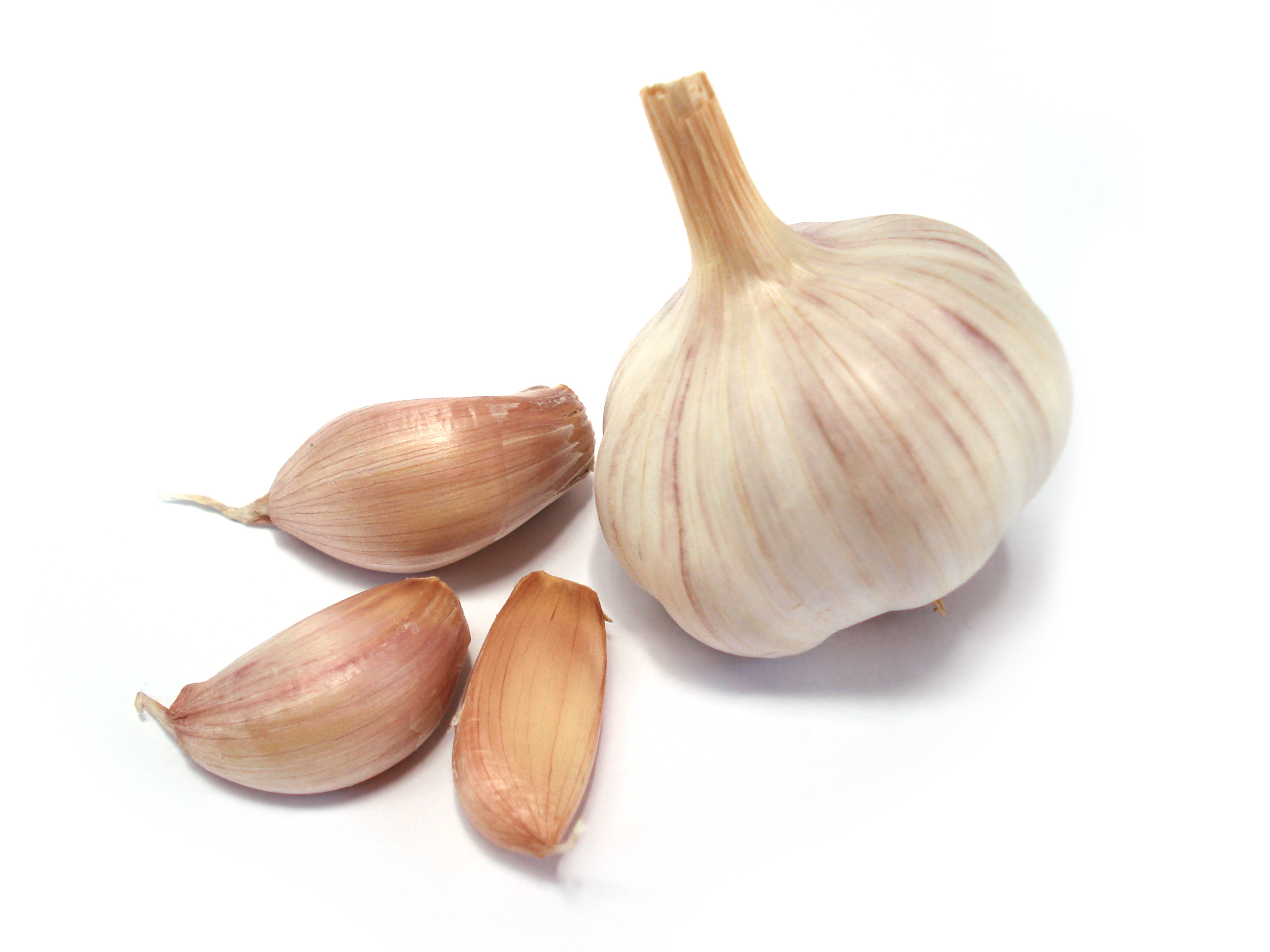Garlic - 08 photo