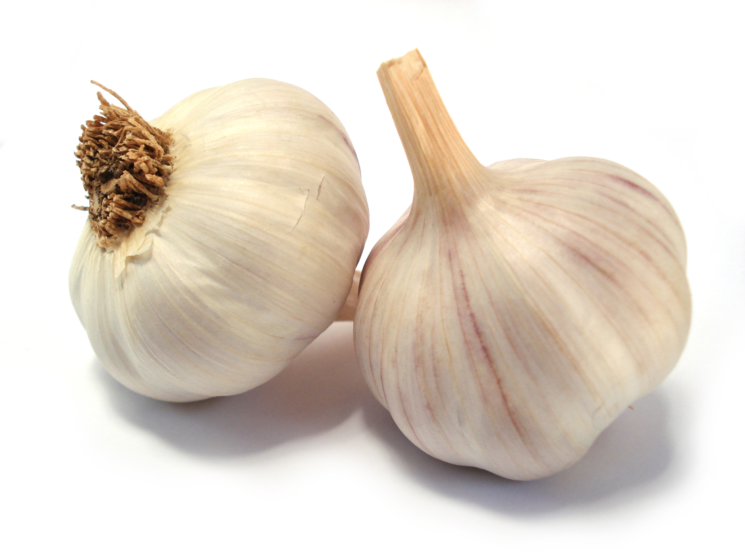 Garlic - 12 photo