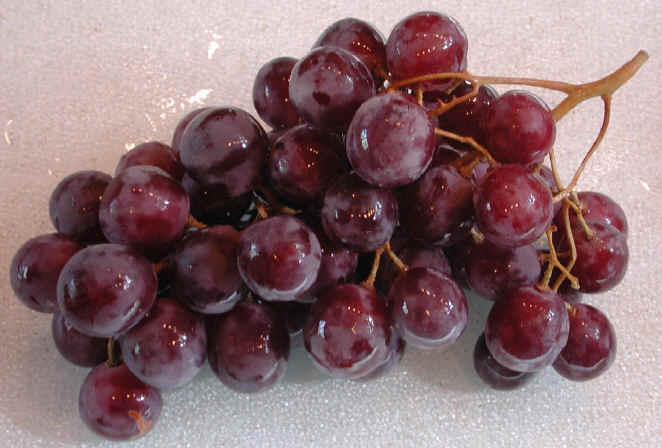 Grapes - 09 photo