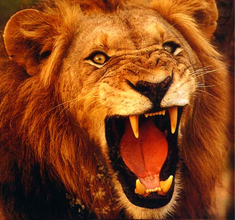 http://eofdreams.com/data_images/dreams/lion/lion-05.jpg