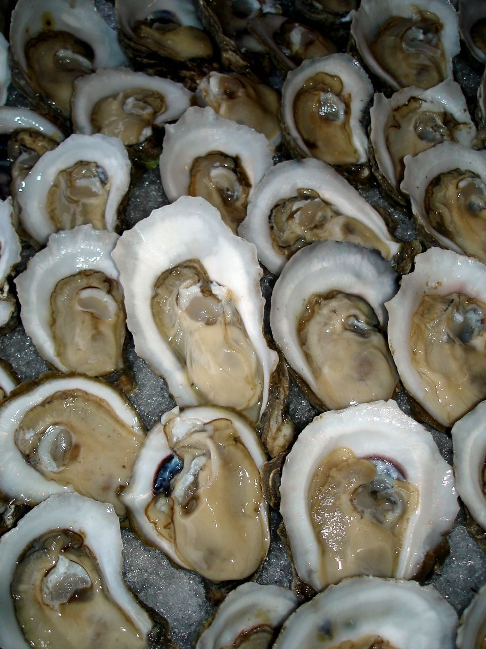 Oysters - 02 photo