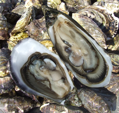Oysters - 03 photo