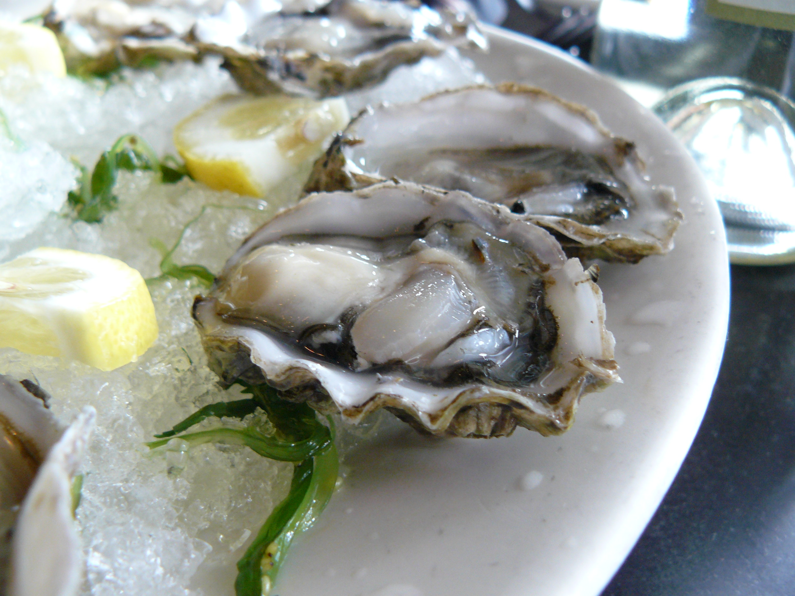 Oysters - 04 photo