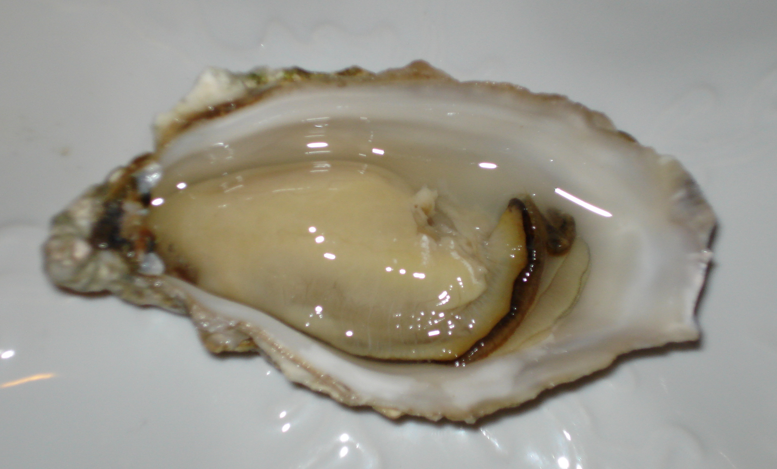Oysters - 10 photo
