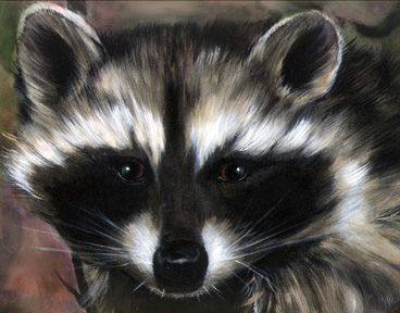 Raccoon - 09 photo