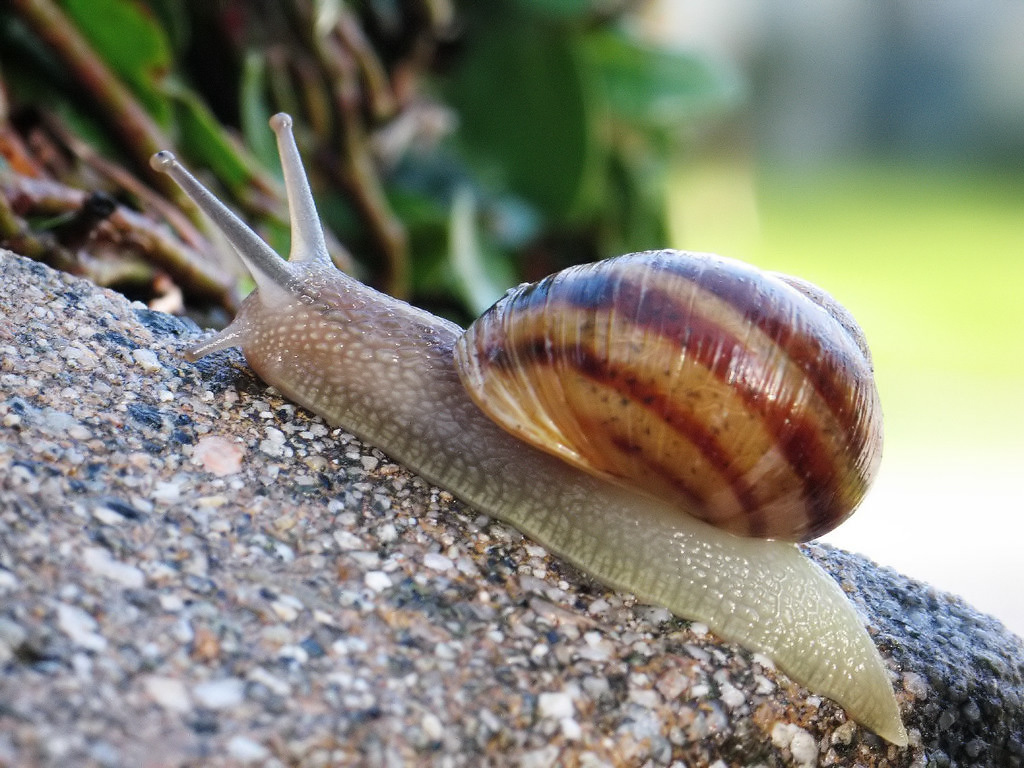 What does a snail dream about: the interpretation of dreams
