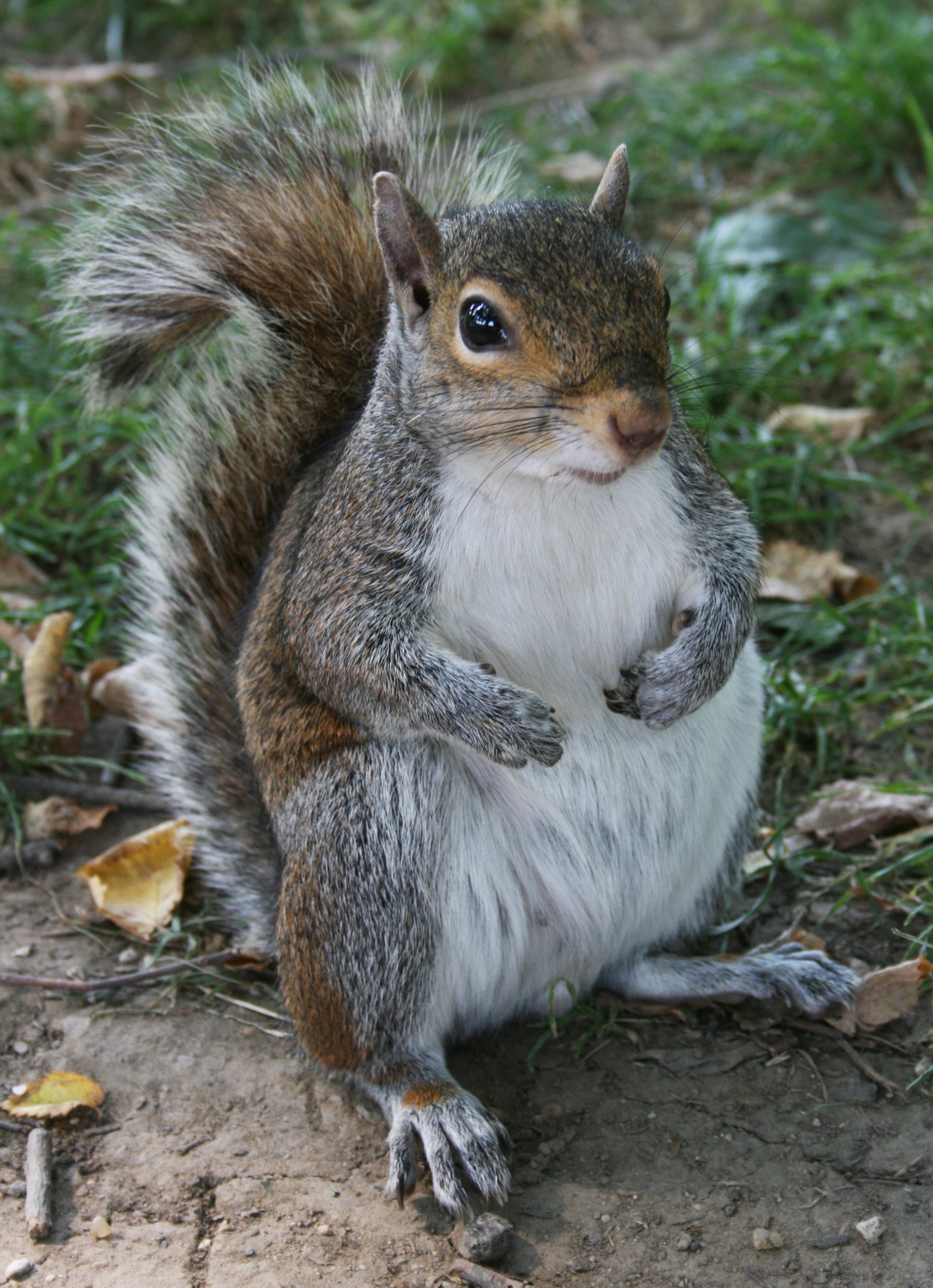 Squirrel - 01 photo