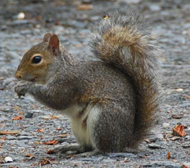 Squirrel - 04 photo