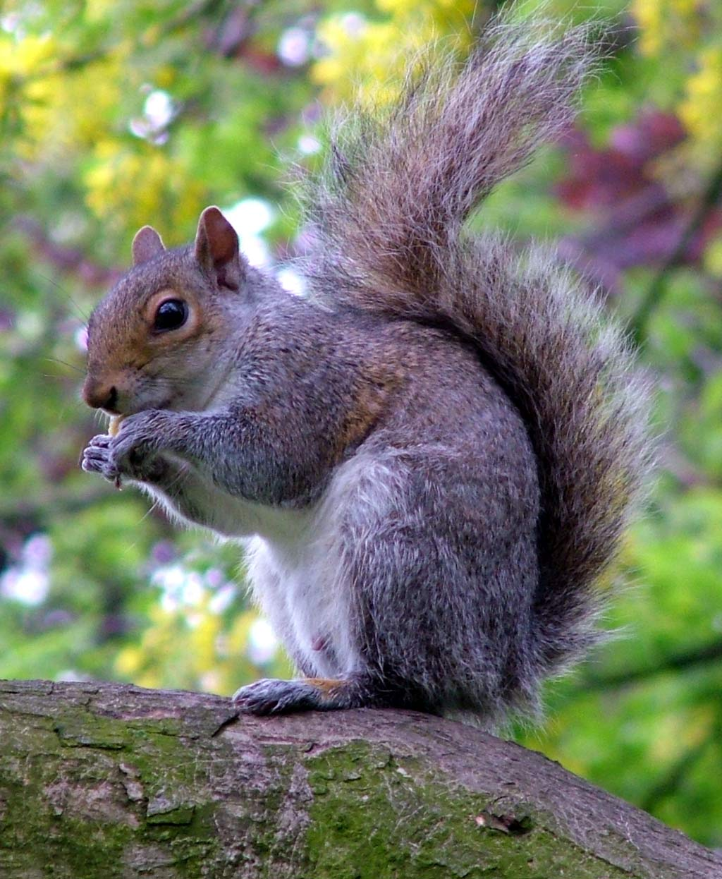 Squirrel - 05 photo