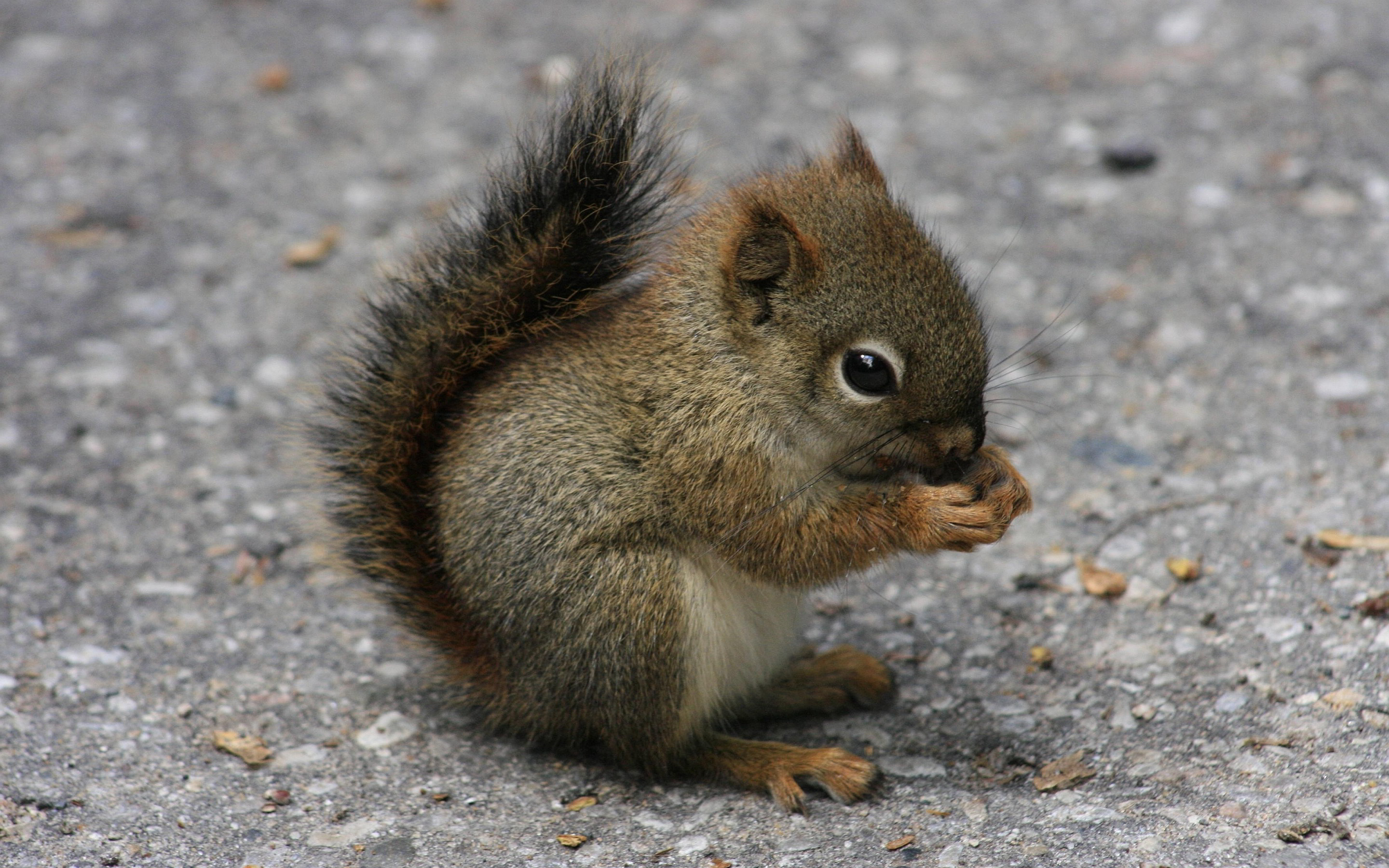 Squirrel - 07 photo