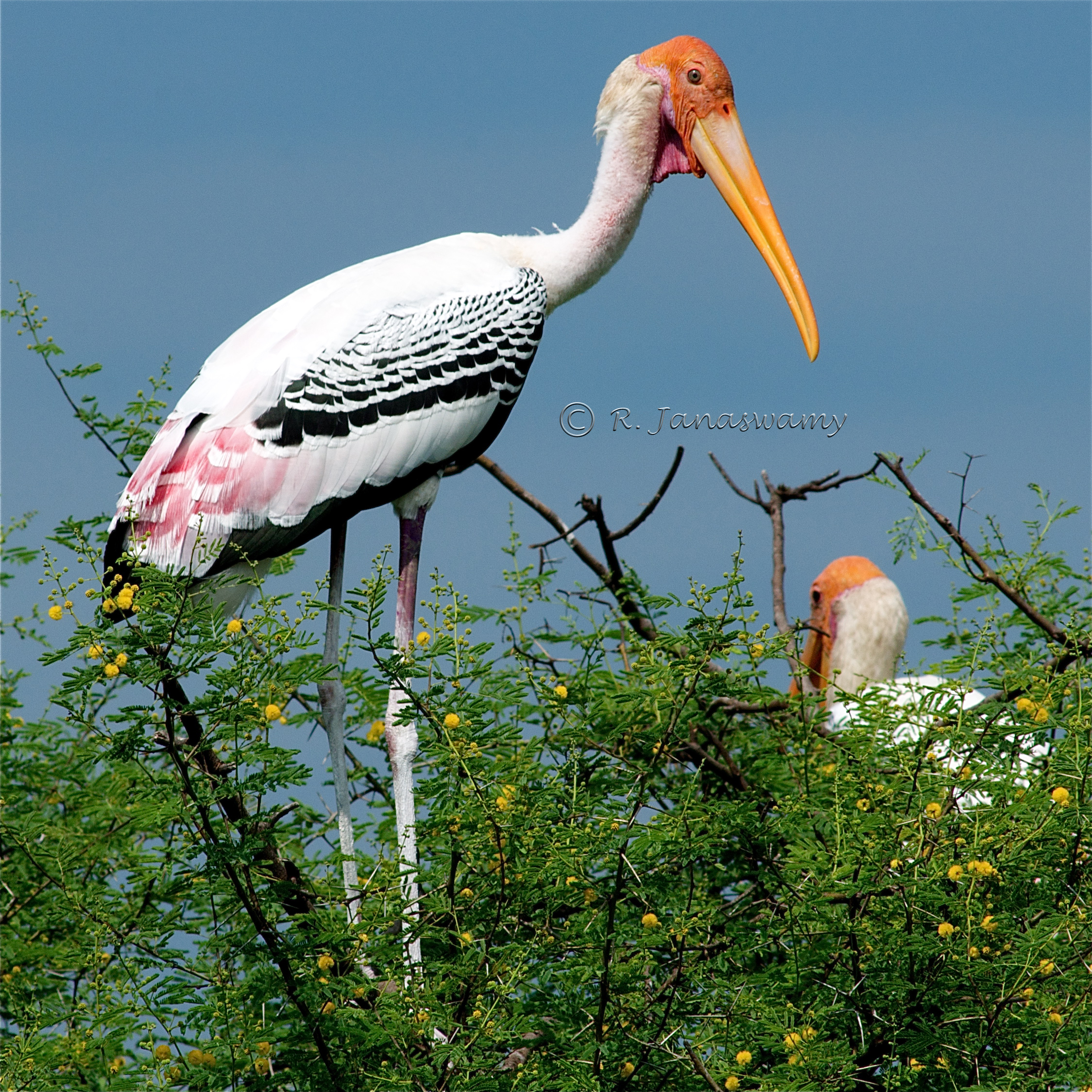 What does a stork dream about: the interpretation of a dream